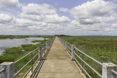 Brücke auf Sumpf in Thailand Stockbilder
