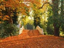 Brücke bedeckt in gefallenen Blättern Stockfotografie