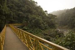 Brücke in den Dschungel Stockbild