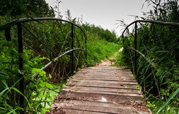 Brücke durch das Unterholz lizenzfreie stockfotos