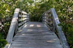 Brücke durch Mangroven stockfotografie