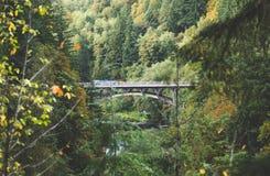 Brücke in einem üppigen Wald Lizenzfreie Stockfotos
