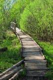 Brücke in einem Frühlingswald Stockfoto