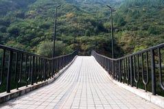 Brücke führt in einen dichten Wald Lizenzfreie Stockbilder