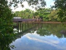 Brücke für birdwatching stockfotografie