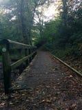 Brücke in Forrest lizenzfreies stockbild