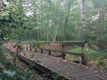 Brücke in Forrest stockfoto