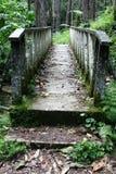 Brücke im Dschungel Stockbilder