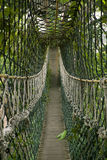 Brücke im Dschungel Stockbild