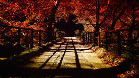Brücke im Herbst Lizenzfreies Stockbild