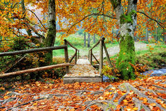 Brücke im Herbstwald stockbilder