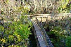 Brücke im Sumpf Lizenzfreie Stockfotografie