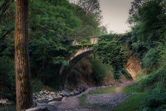 Brücke im Wald Lizenzfreie Stockbilder