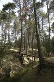 Brücke im Wald Lizenzfreie Stockfotos