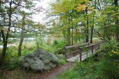 Brücke im Wald Lizenzfreies Stockbild