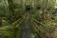 Brücke im Wald Lizenzfreies Stockfoto