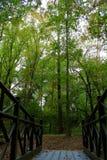 Brücke im Wald Stockfotos