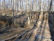 Brücke im Wald im Frühjahr Lizenzfreie Stockfotos