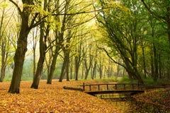 Herbstbrücke Stockbilder