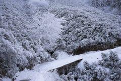 Brücke im Wald im Winter Stockbild