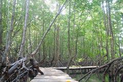 Brücke innerhalb des Mangrovewaldes Stockfotos