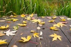 Brücke mit Blättern auf dem Teich Lizenzfreie Stockbilder