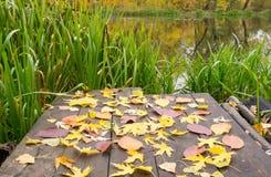 Brücke mit vielen verlässt auf dem Teich Stockbilder