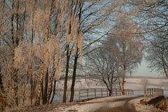 Brücke unter Bäumen Stockbild