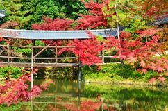 Brücke von Ahornen stockbilder