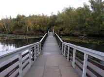 Brücke zur Sumpf-Insel Lizenzfreie Stockbilder