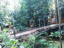 Brückenbau in der Waldfläche stockbild