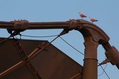Brückenvögel stockbild