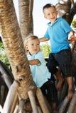 Brüder in einem Baum Stockfotos