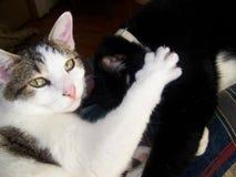 Brüderliche Liebe Stockbild