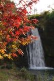 Brüllen der Fall-Park-Stelle Japan stockbild