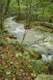 Brüllen Laufnebenfluß und Wald stockfoto