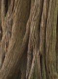 Brąz tekstury drewniany korowaty tło obrazy stock