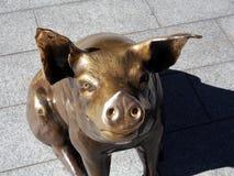 Brązowa świnia, Rundle centrum handlowe, Adelaide Zdjęcie Stock