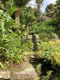 Brązowa czapla Oszałamiająco ogród Devon piękna punkt zdjęcia royalty free