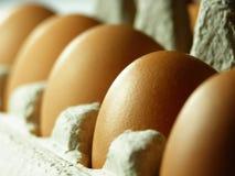 brązowe jajka fotografia stock