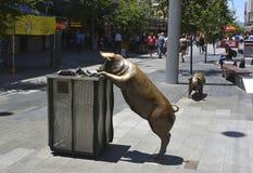 Brązowe rzeźby świnie w Adelaide, Południowy Australia Zdjęcia Stock