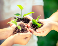 brązowić dzień zakrywającą ziemię środowiskowy ulistnienie idzie zielony idzie uściśnięcia natury zwrotów powiedzeń sloganów teks Fotografia Royalty Free