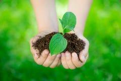 brązowić dzień zakrywającą ziemię środowiskowy ulistnienie idzie zielony idzie uściśnięcia natury zwrotów powiedzeń sloganów teks Fotografia Stock