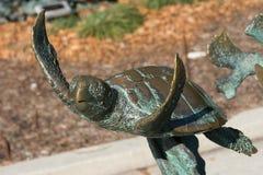 Brązowy żółw fotografia royalty free