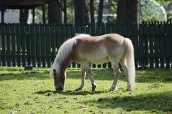 brązowy koń światło zdjęcia stock