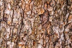 brązowy linii abstrakcyjne tła zdjęcie Drewna barkentyny tekstura Fotografia Stock