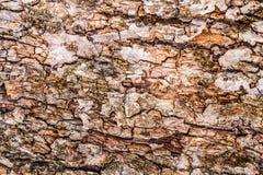 brązowy linii abstrakcyjne tła zdjęcie Drewna barkentyny tekstura Obrazy Stock