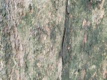 brązowy tła tekstury pomocniczym drewna bagażnika szczegółu tekstury tło Gnarl drzewa Zdjęcie Royalty Free