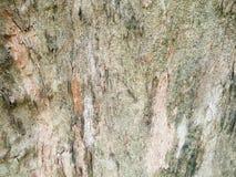 brązowy tła tekstury pomocniczym drewna bagażnika szczegółu tekstury tło Gnarl drzewa Fotografia Stock