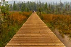 Brązu boardwalk prowadzi w las od Liard Rzecznych Gorących wiosen z parą w odległości, zdjęcie royalty free